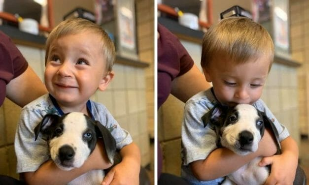 Two-Year-Old Boy with Cleft Lip and Shelter Dog with the Same Condition Are the Perfect Match