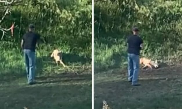 SIGN: Justice for Coyote Shot 12 Times While Yelping in Pain