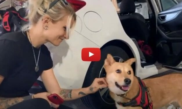 VIDEO: Dog Survives Brutal Meat Trade, Flies to Freedom with Founder of Miyoko's