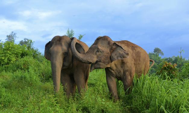 30 Ringling Bros Circus Elephants Will Finally Retire to Permanent Florida Sanctuary