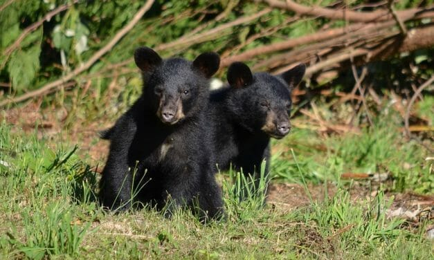 SIGN: Stop Trophy Hunters in NJ from 'Baiting' and Shooting Baby Black Bears