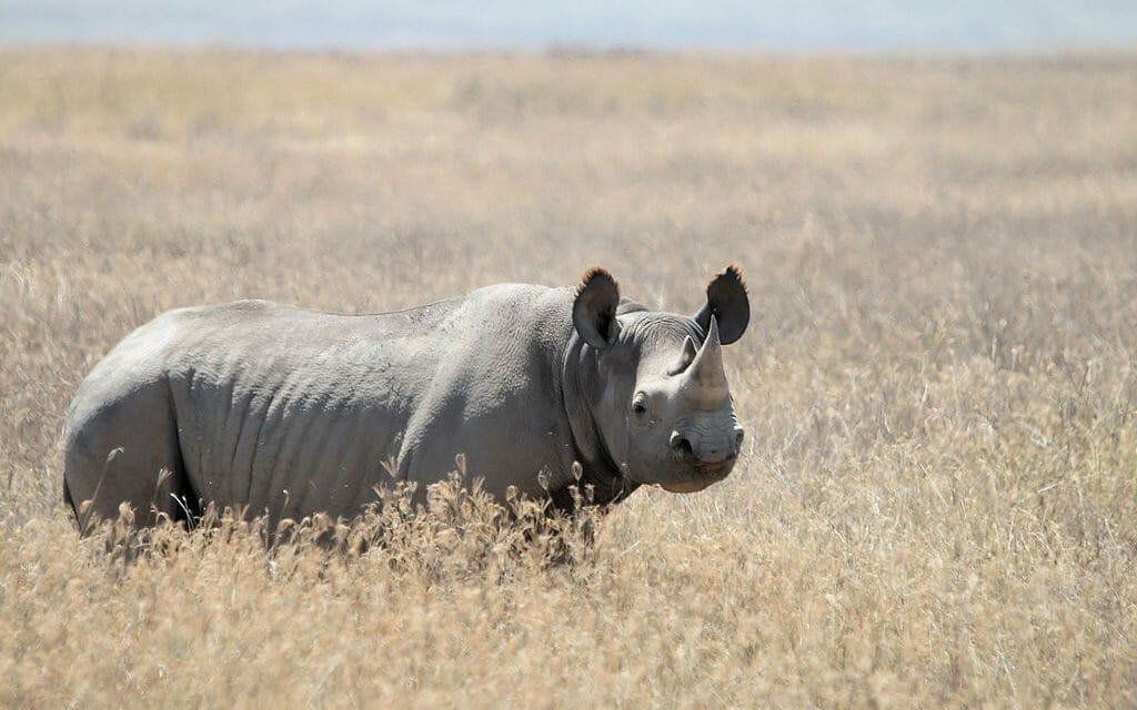 Zimbabwe Bans Coal Mining in Home of Endangered Black Rhino