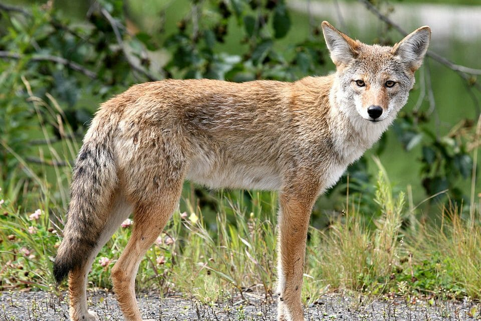 Washington Bans Wildlife Killing Contests, Joining Only Six Other States
