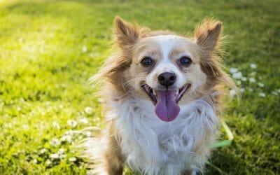 happy little dog
