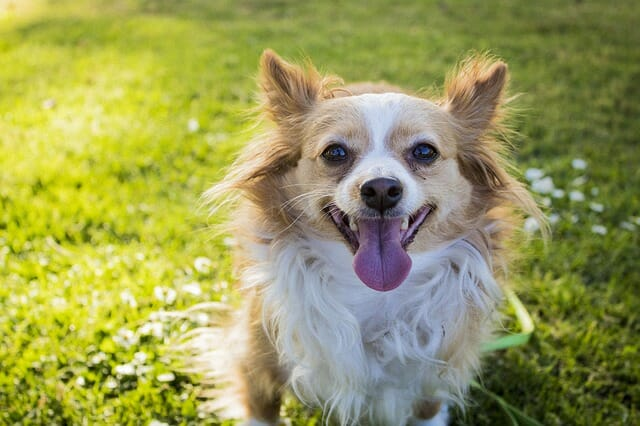 Your Dog's Heart Rate Spikes When You Tell Them 'I Love You,' New Study Finds