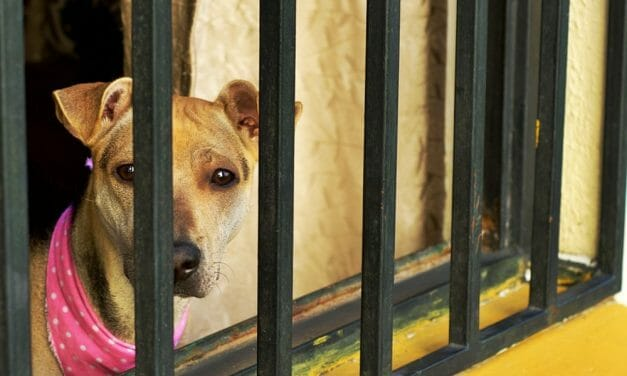 New Bill Could Allow Advocates to Sue on Behalf of Abused Animals