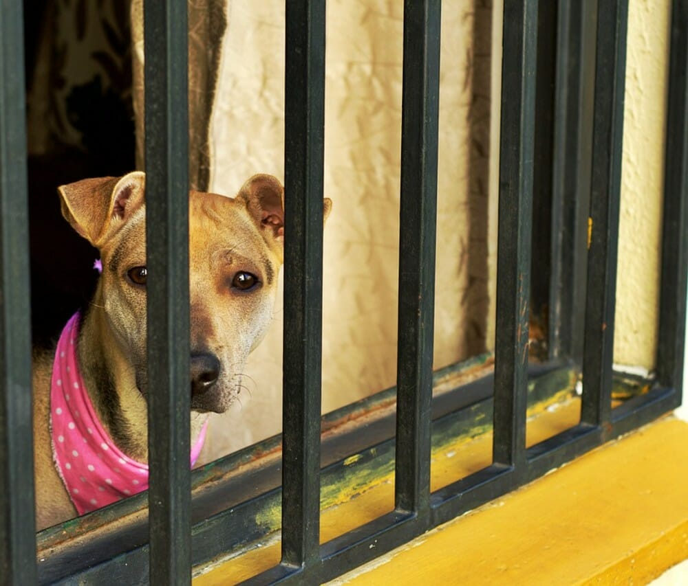 sad dog dog abuse