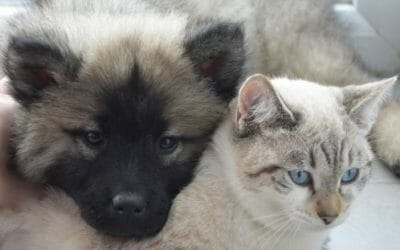 In A Blow to Cruel Puppy Mills, California Bans Store Sales of Dogs, Cats and Rabbits