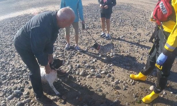 Heroic Rescuers Save Dog Stranded After Chasing Seagulls Out to the Ocean
