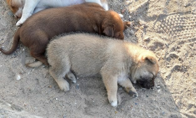 SIGN: Justice for Puppies Dumped in Park with Throats Slit