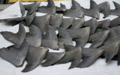 barbaric shark finning