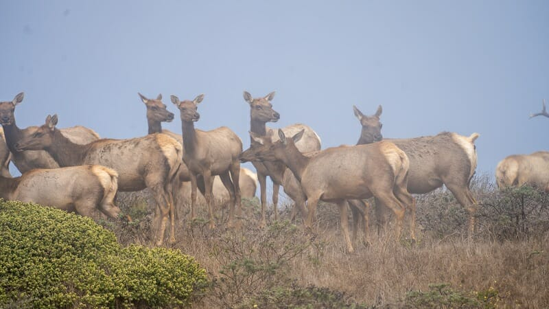 Activists Gather to Stop the Killing of Rare Tule Elk for Commercial Interests
