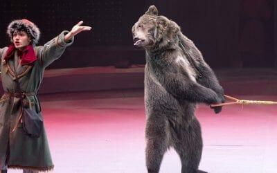 Yasha circus bear