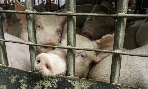 Lady Freethinker Supports Manifesto Calling to End Animal Abuse Amid COVID Epidemic