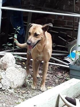 dog outdoors