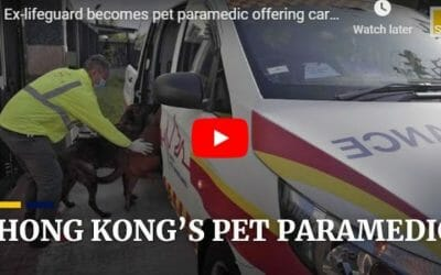 Hong Kong pet paramedic