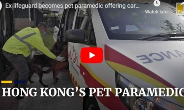 VIDEO: Former Lifeguard Now Saves Dogs and Cats as a Pet Paramedic