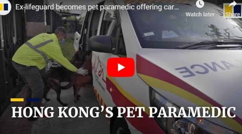 Hong Kong pet paramedic