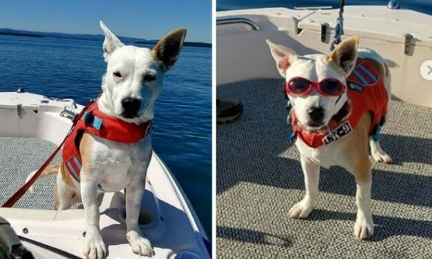 This Dog Is Saving Endangered Whales with One Very Special Skill
