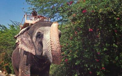 tourism elephant