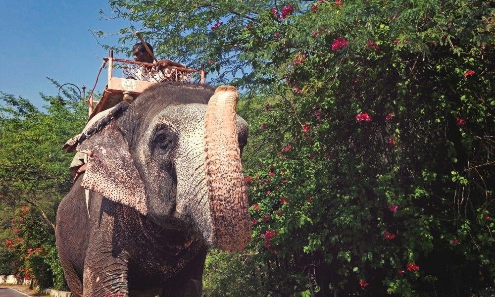 End Cruel Elephant Tourism, Nonprofit Urges UK Government