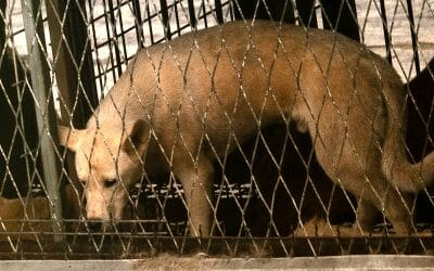 Lady Freethinker Investigation Exposes Cruelty at Major Dog Meat Auction House