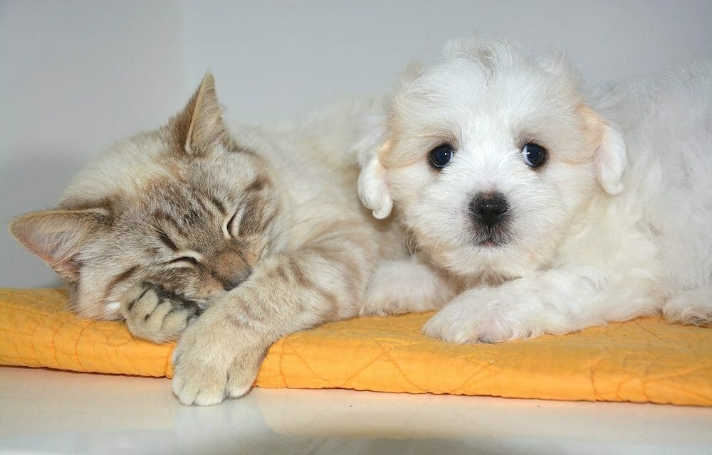 SIGN: Justice for Dog and Cat Chopped Up and Their Hearts Eaten