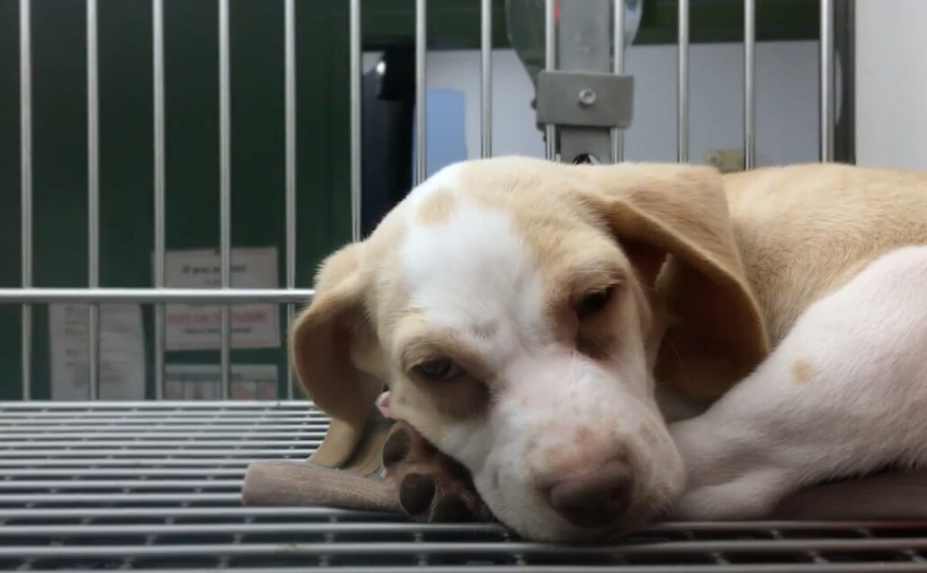 SIGN: Pass New Bill to End Animal Torture for Research