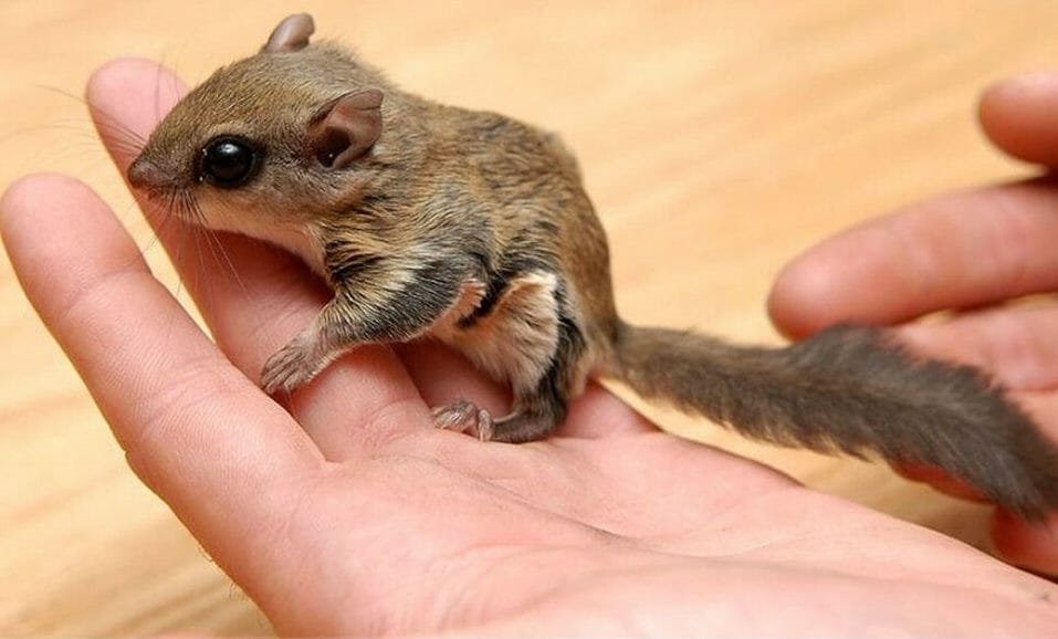 SIGN: Justice for Flying Squirrels Cruelly Trapped and Sold by Poachers