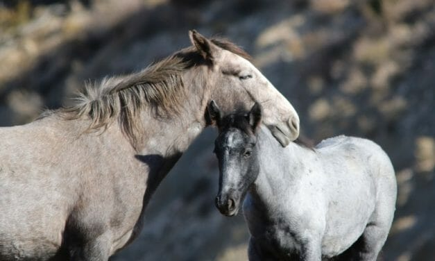 SIGN: Save Utah's Wild Horses from Deadly Surgical Sterilization