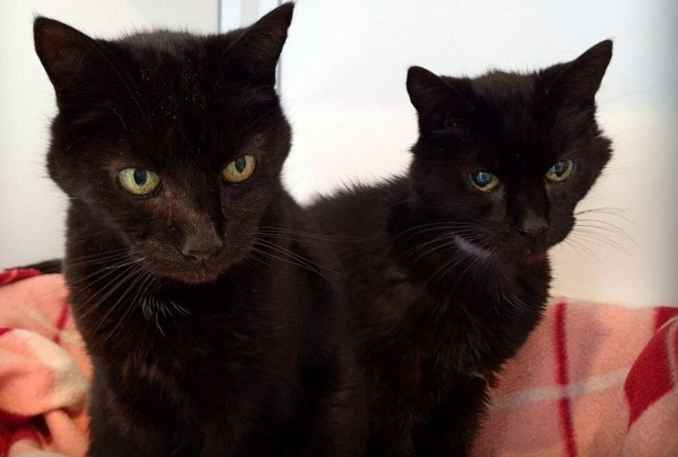 21-Year-Old Cat Brothers Find New Forever Home to Live Out Their Sunset Years
