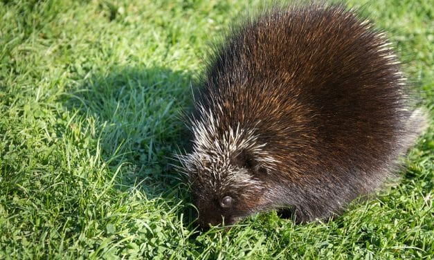 SIGN: Justice for Porcupines Beaten to Death with Police Batons