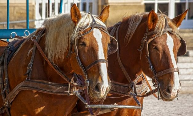 Horse-Drawn Buggies Get a Cruelty-Free Upgrade in Yucatán