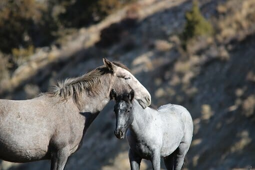 SIGN: Stop Sending America's Wild Horses to Slaughter
