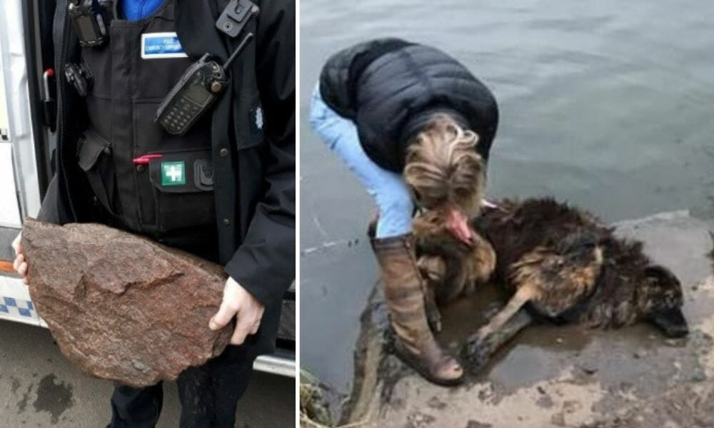 SIGN: Justice for Dog Thrown in River with Huge Rock Tied to Neck