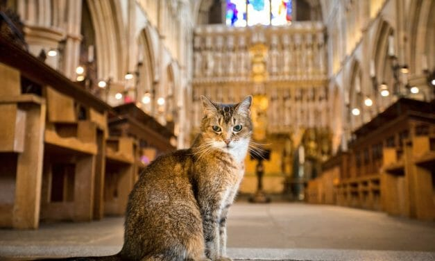 London Cathedral Hosts Memorial for World-Famous Cat