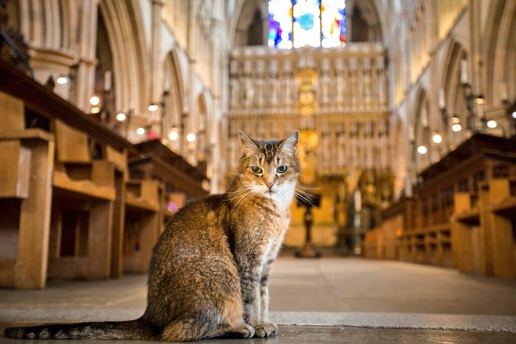 Doorkins cathedral cat