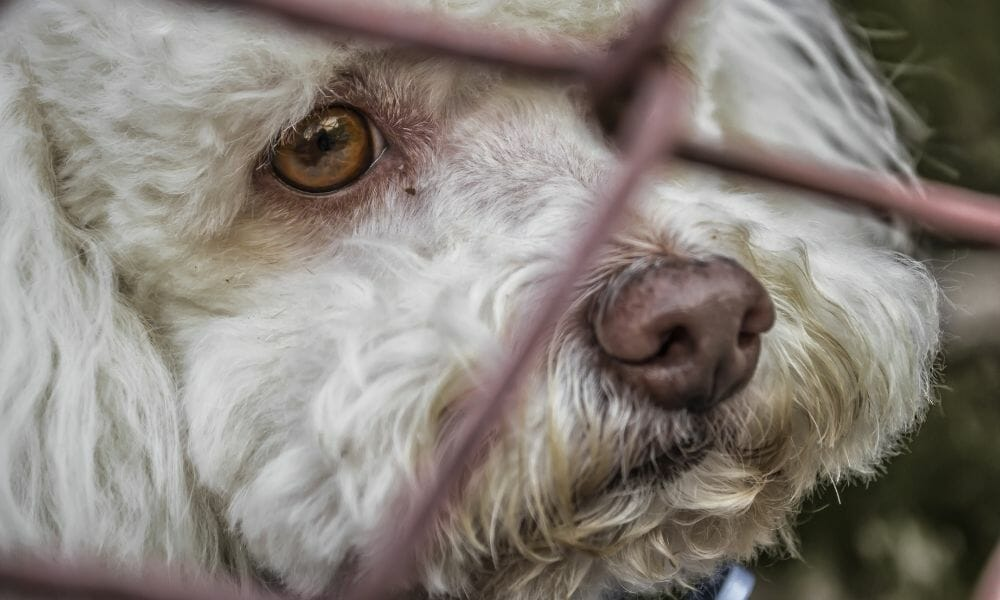 SIGN: Justice for 21 Dogs Killed by Illegal Breeder Instead of Surrendering Them