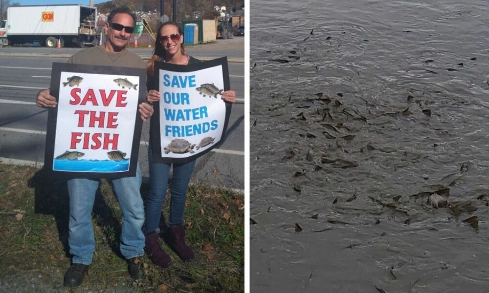 Activists Protest Draining of Lake with Fish and Turtles Trapped Inside