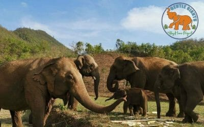 38 Elephants In Danger of Being Sold into Logging and Circus Industries