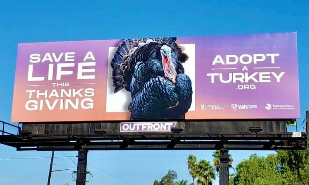 Save a Bird's Life This Thanksgiving with the 'Adopt a Turkey' Project