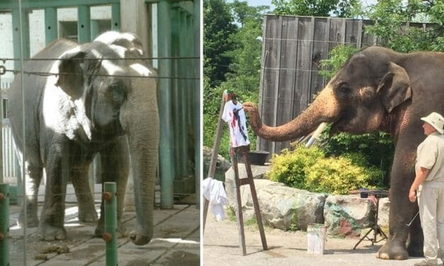 SIGN: End Cruel Elephant Captivity in Canada