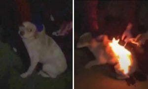 dog lit on fire