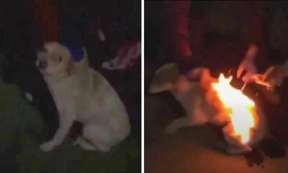 SIGN: Justice for Puppy Set on Fire for Social Media Likes