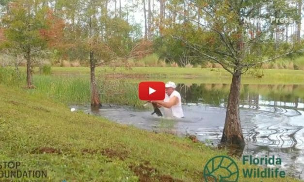 VIDEO: Man Saves Puppy from Alligator Attack