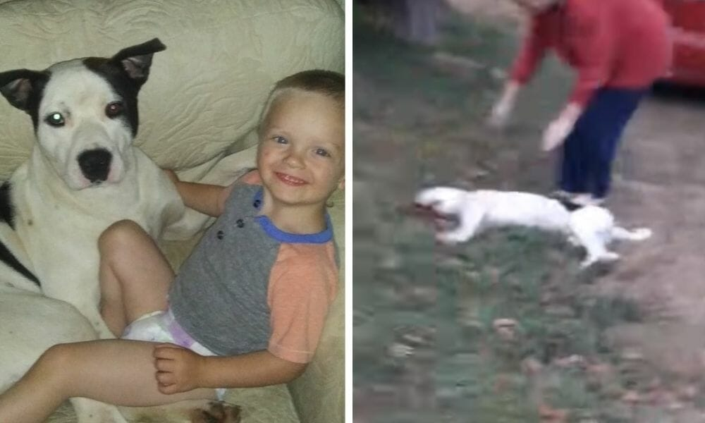 SIGN: Justice for Dog Shot by Investigator Who Went to the Wrong House