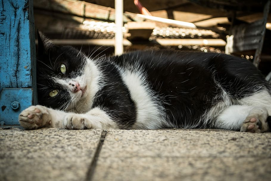 SIGN: Justice for Star, Cat Brutally Beaten to Death