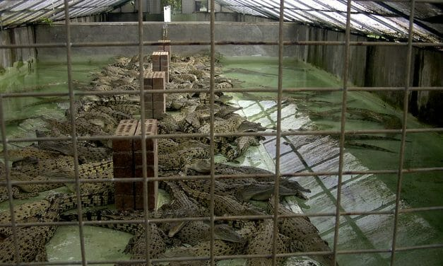 SIGN: Stop New Farm from Raising 50,000 Crocodiles to Skin for Hermès Handbags