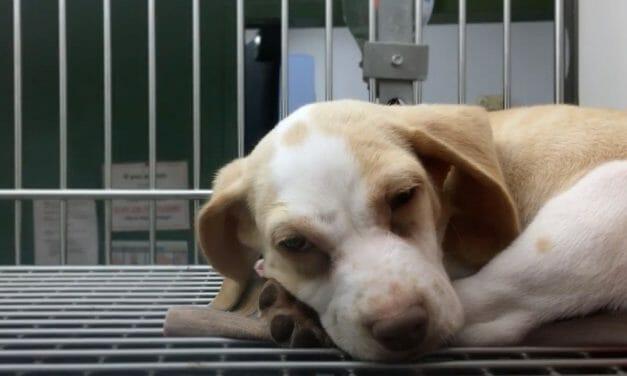 SIGN: Stop Requiring Horrifying Animal Tests for FDA Drug Approval