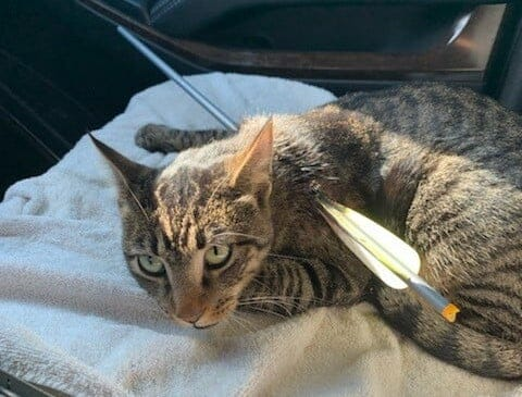 SIGN: Justice for Elvis, Cat Impaled with Arrow